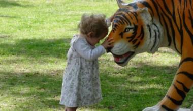 Cześć tygrysku